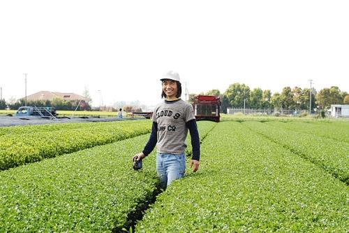 Harvesting Time VIII