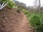Jesisita Trail070blog