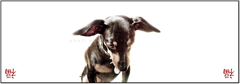 Happy Birthday Doggy. Happy Birthday Doggy Photo
